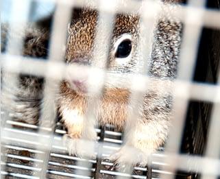 Rodents & Wildlife
