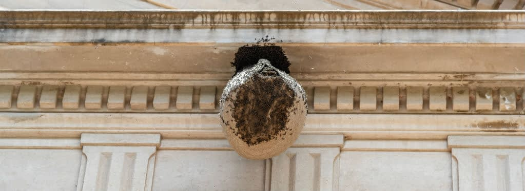 Honeycomb nest hanging on an antique building facade